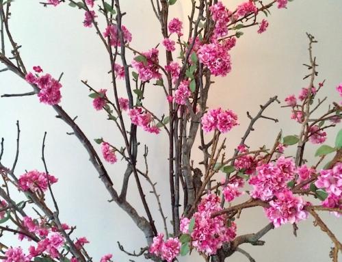 Portfolio voorjaar truffels